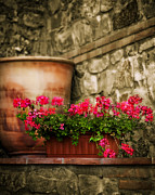 Rock Walls Prints - Potted geranium Print by Marilyn Hunt