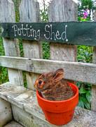 Brook Burling - Potted Peter Rabbit