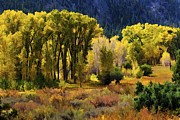 Colorado Greeting Cards Prints - Poudre Autumn Print by Jon Burch Photography