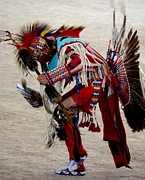 Drum Horse Photos - Pow Wow by Veronica Batterson