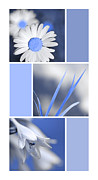 Assorted Framed Prints - Powder Blue Flowers Collage Framed Print by Christina Rollo
