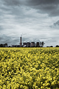 Power Plants Framed Prints - Power station Uk across a field of rapeseed Framed Print by Jon Boyes