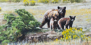 Caring Mother Paintings - Prairie Black Bears by Aaron Spong