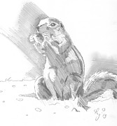 Prairie Dog Drawings - Prairie Dog Drawing by Mike Jory