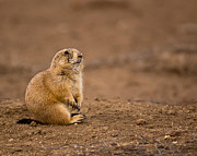 Robert Frederick - Prairie Dog On Dirt