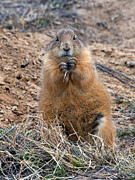 Tim Moore - Prairie Dog