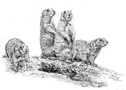 Prairie Dog Drawings - Prairie Dogs by Craig Carlson