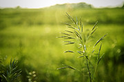 Green Grass Framed Prints - Prairie Grass 2 Framed Print by Scott Norris