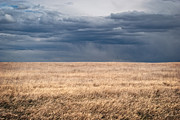 Julie Magers Soulen - Prairie Grassland with...