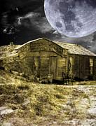 Judy Hall-Folde - Prairie Life Digital