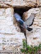 Constance Woods - Pray For The Peace Of Jerusalem
