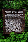 Motivational Sayings Prints - Prayer of the Woods Print by Michelle Calkins