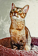 Cats Framed Prints - Precious Anya Framed Print by David G Paul