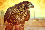 Naturalist Digital Art Posters - Predator Hawk Poster by Janice Rae Pariza