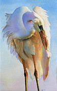 Sarah Buell Dowling - Preening Egret