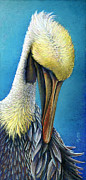 Coastal Birds Pastels Framed Prints - Preening Pelican Framed Print by Laura Griffith