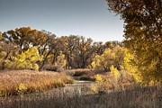 Prescott Prints - Prescott Riparian Print by Ray Short