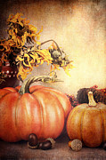 Sunflower Studio Art Framed Prints - Pretty Autumn Display Framed Print by Stephanie Frey
