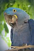 Parrot Art Print Posters - Pretty Bird Poster by Lynn Sprowl
