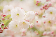 Snug Digital Art Prints - Pretty Blossom Print by Natalie Kinnear