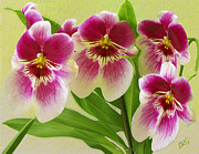 Floral - Pretty Faces - Orchid by Ben and Raisa Gertsberg