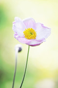 Angela Doelling AD DESIGN Photo and PhotoArt - Pretty flower