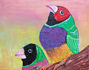 Laura Barbosa - Pretty Gouldian Finches