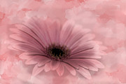 Diane Schuster - Pretty In Pink Gerbera...