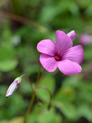 John Tidball  - Pretty in Pink