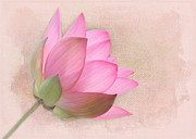 Florida Flower Posters - Pretty in Pink Lotus Blossom Poster by Sabrina L Ryan