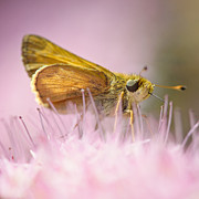 Feeding Photos - Pretty in Pink by Vicki Jauron