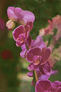 Flower Photographers Art - Pretty in pink water color effect by Tom Prendergast