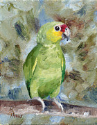 Amazon Parrot Paintings - Pretty Parrot by Brenda Thour