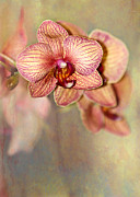 Colorful Contemporary Art - Pretty Peach Phalaenopsis Orchids by Sabrina L Ryan