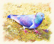 Cindy Nunn - Pretty Pigeon 4