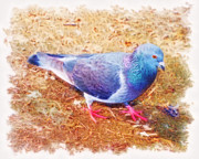 Cindy Nunn - Pretty Pigeon 5