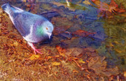 Cindy Nunn - Pretty Pigeon 6