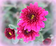 Carolyn Ricks Metal Prints - Pretty Pink Mums Metal Print by Carolyn Ricks