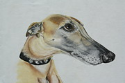 Hound Pastels Framed Prints - Pretty Please Framed Print by Rose Slack