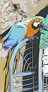 Comic Book Style Art. Framed Prints - Pretty Polly Framed Print by Diane Macdonald