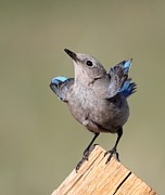 Birds - Pretty Pose by Shane Bechler