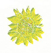 Lino Framed Prints - Pretty Sunflower  Framed Print by Lynn-Marie Gildersleeve