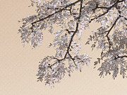Nina Bradica Metal Prints - Pretty Tree Branch-2 Metal Print by Nina Bradica