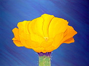 Karyn Robinson Metal Prints - Prickly Pear Flower Metal Print by Karyn Robinson