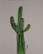 Desert Drawings Prints - Prickly Saguaro Print by Marcia Weller-Wenbert