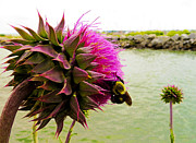 Fuzzy Digital Art - Prickly Situation by Shawna  Rowe