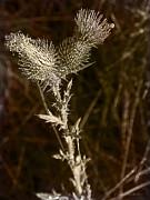 Prickly To The End Print by Jo-Anne Gazo-McKim