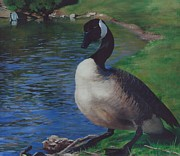 Canadian Geese Paintings - Prideful Stance by Crystalyn Costa