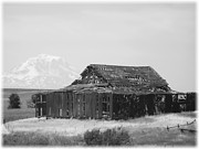 Old Barns Framed Prints - Prime Real Estate - Black and White Framed Print by Carol Groenen