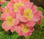 Primroses Paintings - Primroses by Carmella Tuliszewski